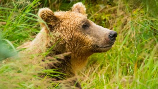 7 правил безопасного общения с медведями и …вашим боссом