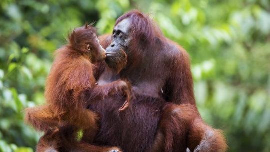 Записки с Борнео: в поисках дикого