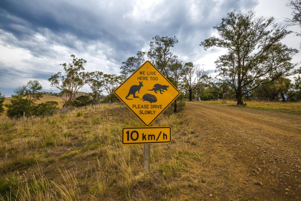 путешествие на автомобиле - гравийная дорога, Австралия