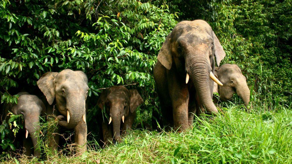 5 must-see мест на Борнео для любителей животных: логистика и лайфхаки. Часть 2 — Джунгли вдоль реки Кинабатанган